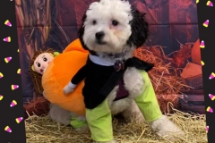 Cute-dog-in-costume-Waggles-Pet-Resort