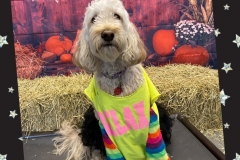 Dog-in-80s-costume-Waggles-Pet-Resort