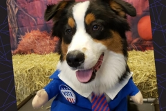 Dog-in-Presidential-Costume-Waggles-Pet-Resort
