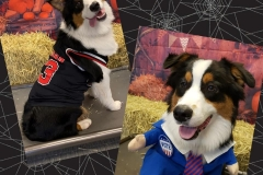 Dog-in-basketball-costume-Waggles-Pet-Resort