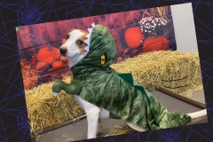 Dog-in-dinosaur-costume-Waggles-Pet-Resort