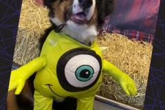 Dog-in-monster-costume-Waggles-Pet-Resort