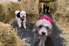 Dogs-in-a-hay-maze-Waggles-Pet-Resort