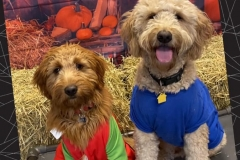 Dogs-in-super-hero-costume-Waggles-Pet-Resort