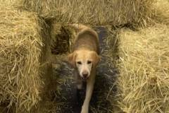 Fun-Hay-Maze-for-Dogs-Waggles-Pet-Resort
