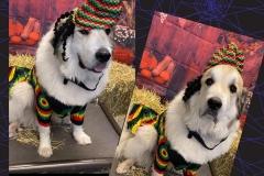 Fun-dog-costume-Waggles-Pet-Resort