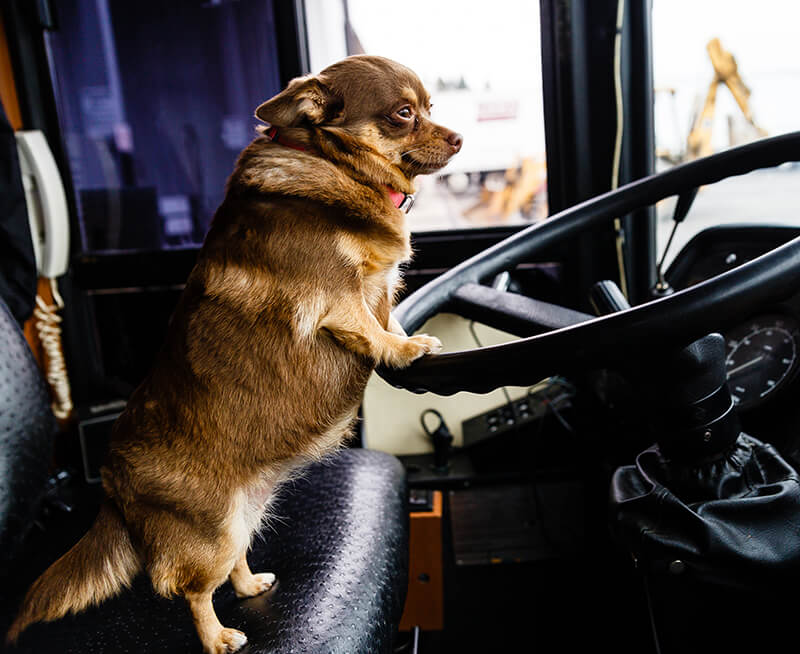 Pet Resort Chauffeur Services Deliver These 4 Benefits (and also Your Dog)