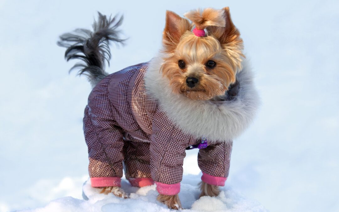 keep-your-dog-safe-from-the-cold